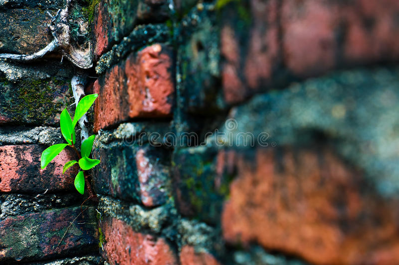 Small tree growing in old cement brick royalty free stock photography