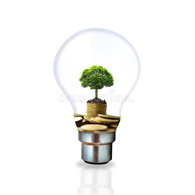 A small tree that grows on a pile of coins in a light bulb on a white background royalty free stock images