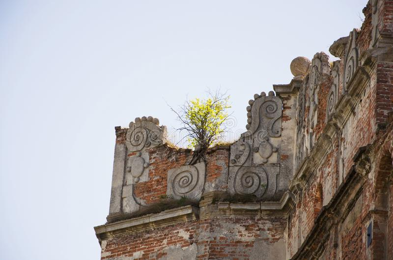 Small tree grows up on the ruins old castle stock photo
