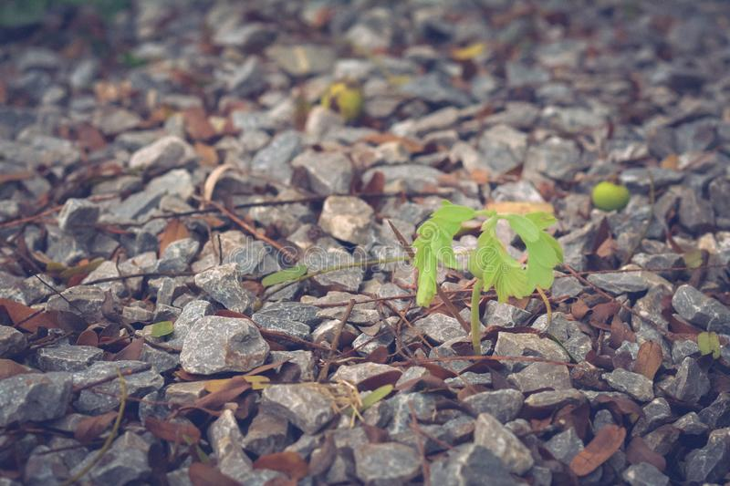 Small tree growth on gravel with copy space for your text style. Still life in nature concept stock images