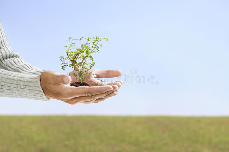 Small tree in hand royalty free stock photos
