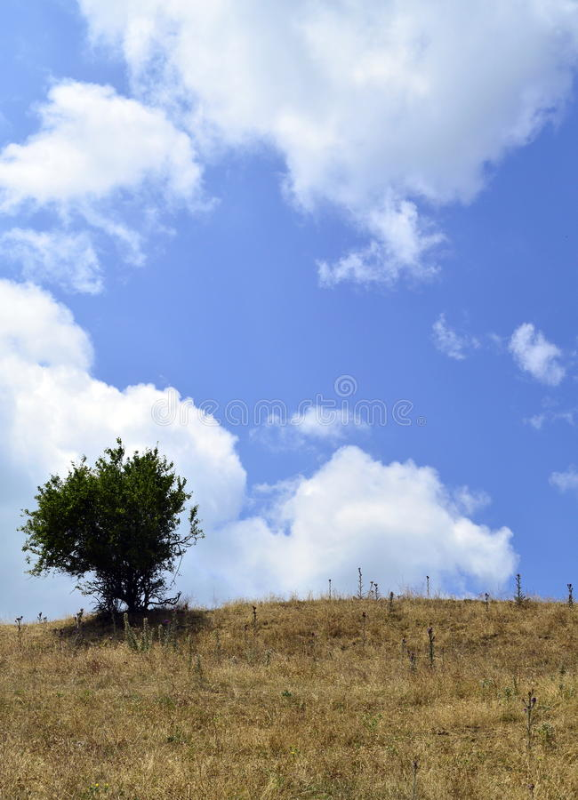 Small tree in the hill stock photo