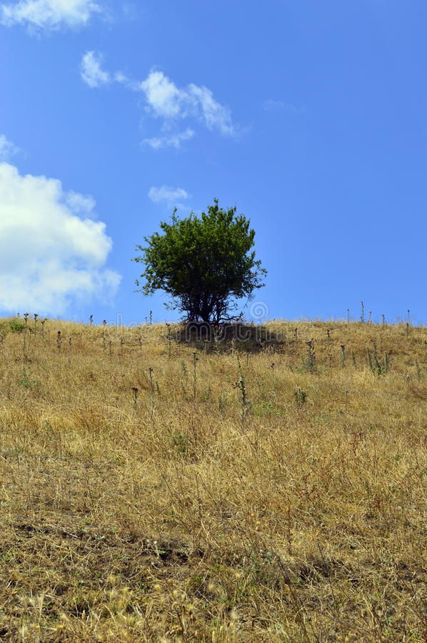 Small tree in the hill royalty free stock photo