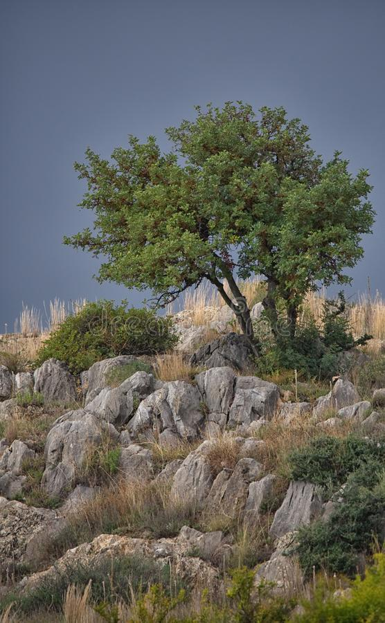 Small tree on hilltop, limestone rock below. Sedella, Spain. A small tree sits on a hilltop of limestone rock, contrasting with a grey and overcast evening sky stock photo