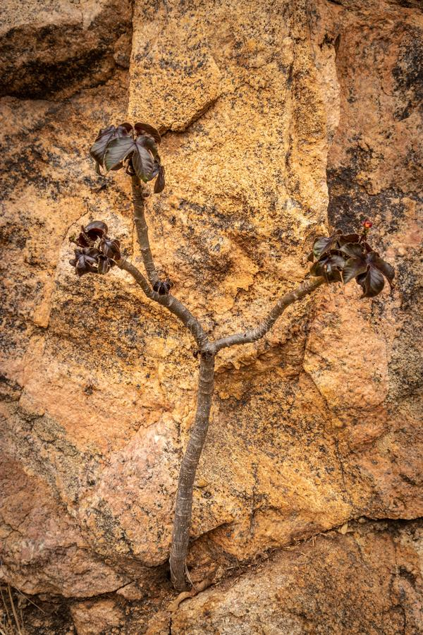Small tree Isolated showing the power of nature. Isolated small tree growing in concrete holes showing the power of nature stock photography