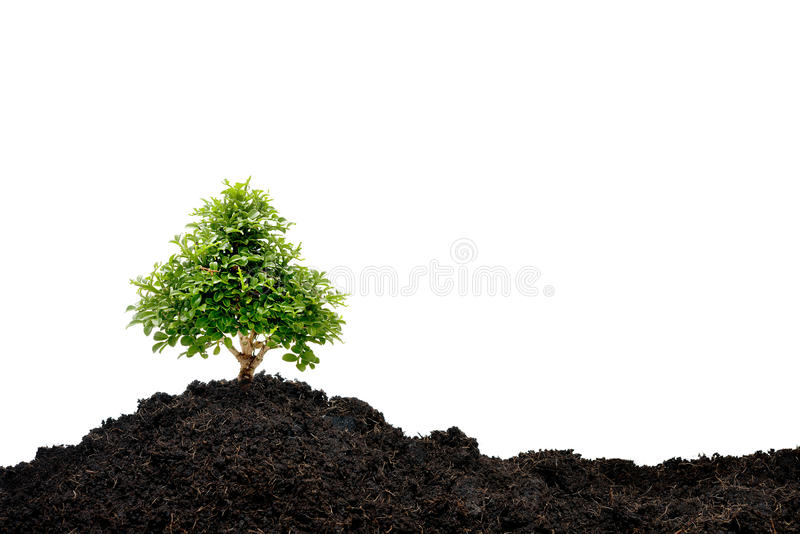 Small tree. Isolated on white background stock photo