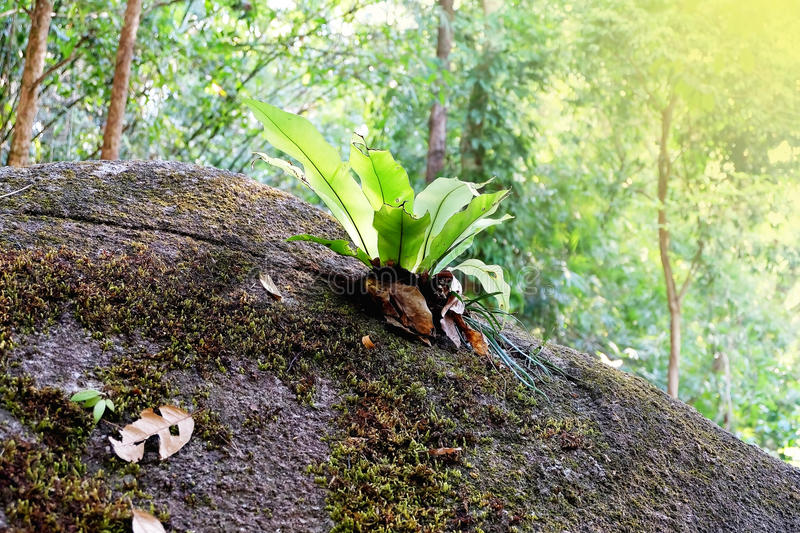 Small tree. Small tree in the jungle, Abundance of the watershed royalty free stock photography