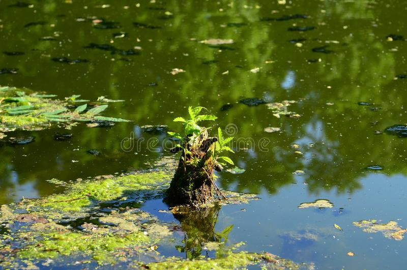 Small tree. In the middle of the lake royalty free stock image