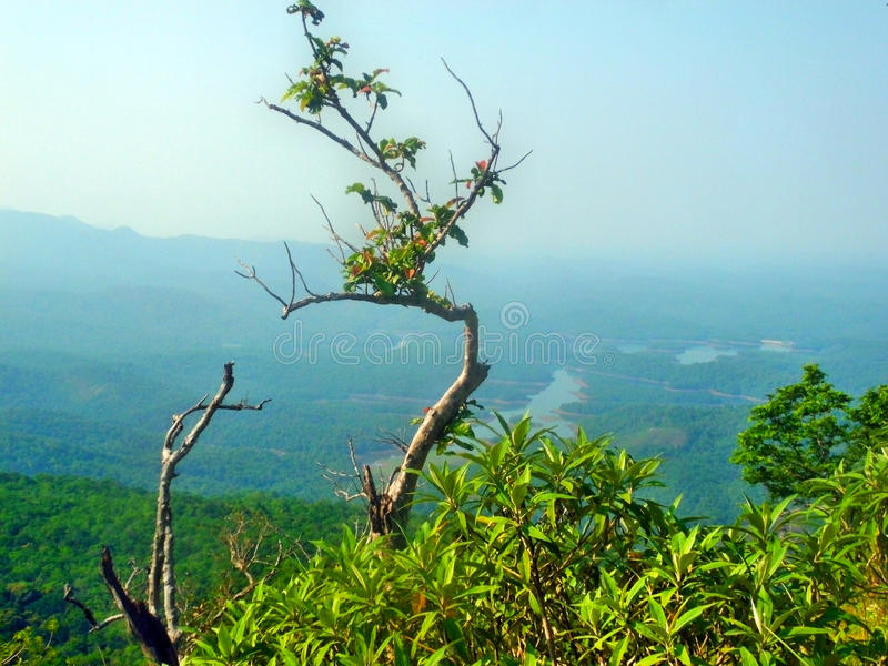 Small tree in the mountain. Hill, snow royalty free stock photos