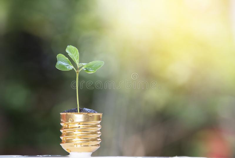 Small tree. With nature background royalty free stock photos