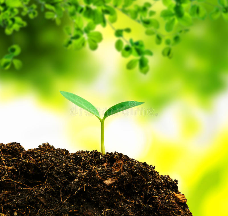 Small Tree Of Life: Small Tree New Life Stock Image. Image Of Agricultural