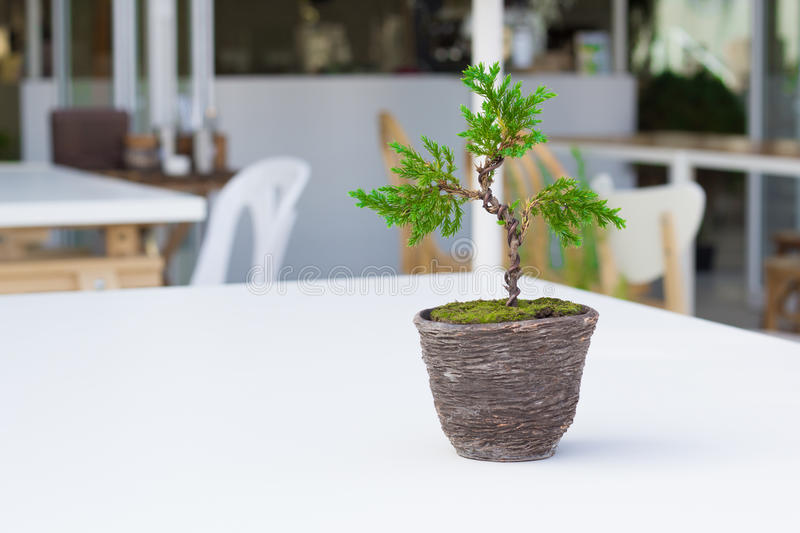 Small tree out door. In the sunlight royalty free stock image