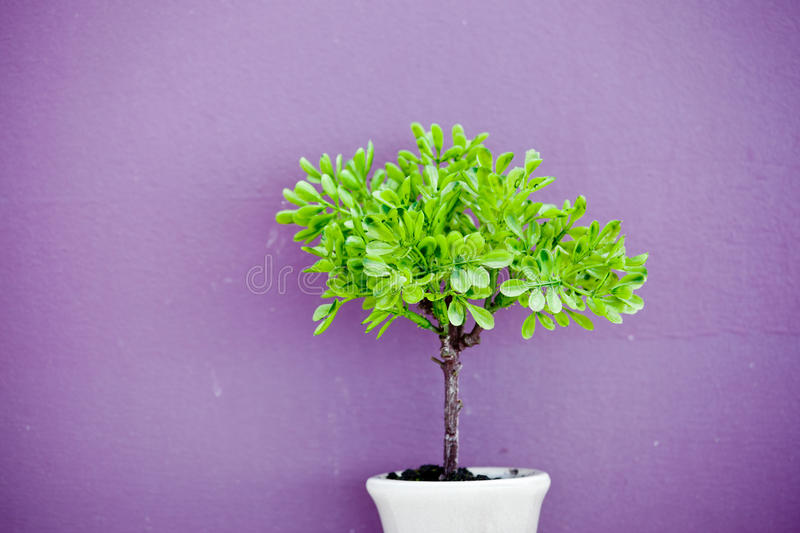 Small tree. Over purple background stock image