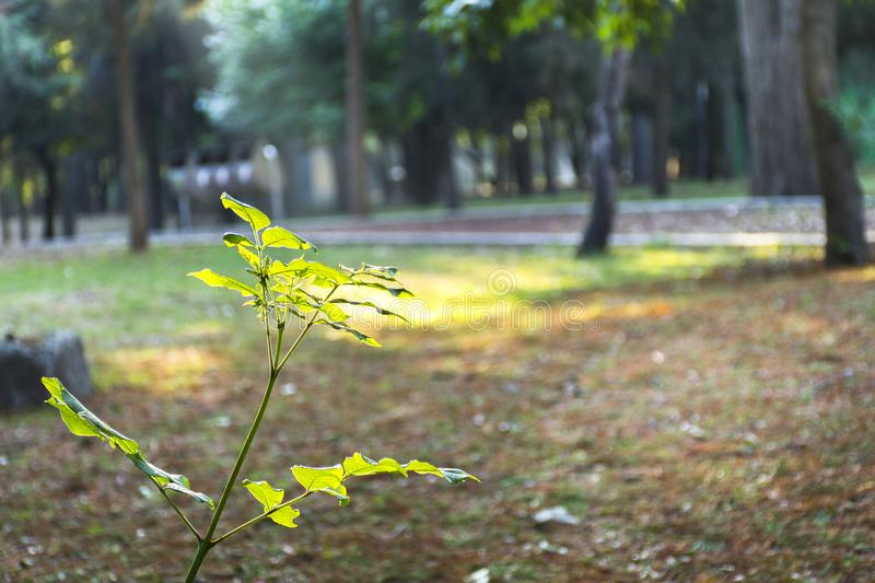 Small Tree in a Park royalty free stock image