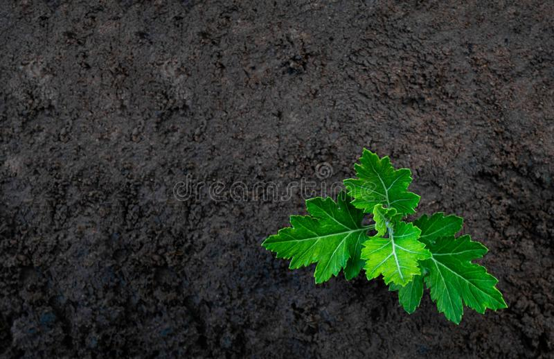 Small tree plant growing on soil in the garden. Saving world environment concept.  royalty free stock image
