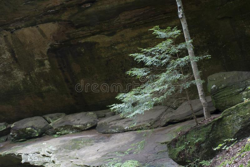 Small tree with rock face. A small tree growing in front of a rock cliff that forms the gorge walls in Hocking Hills State Forest at old mans cave near Logan stock photos