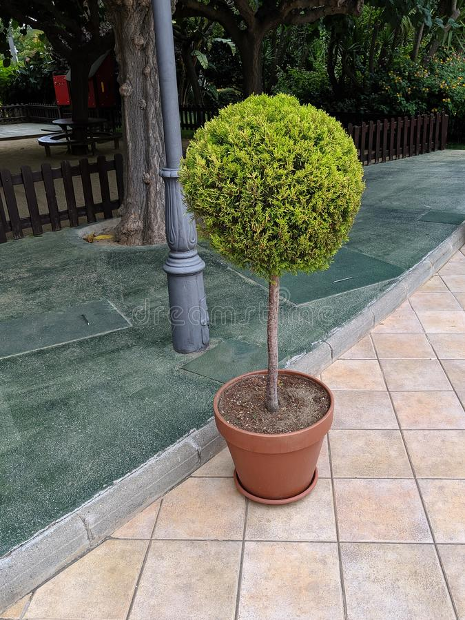 Small round tree royalty free stock images