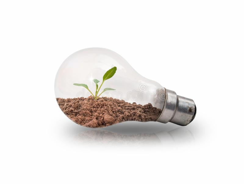 Small tree seedlings in light bulbs on a white background. With energy-saving concepts to protect the environment stock illustration