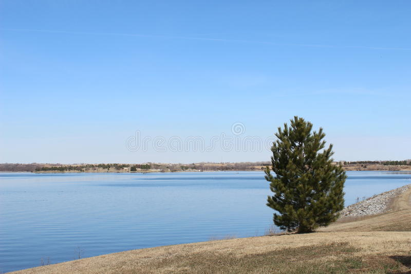 A small tree on the side of a lake under the blue sky. A small green tree on the side of a lake under the blue sky stock photos