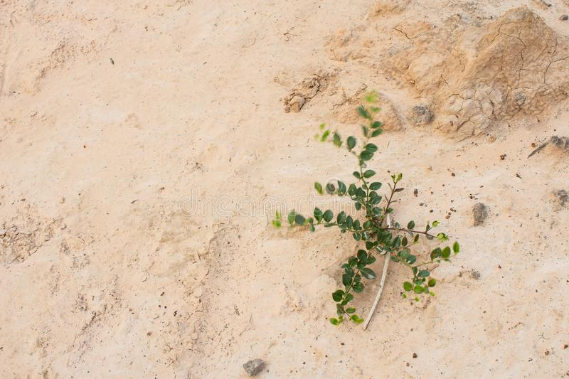 Small tree. That grow on the sandy ground stock photography