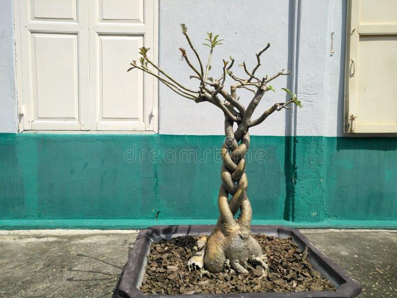 Small tree. Thai royalty free stock photography