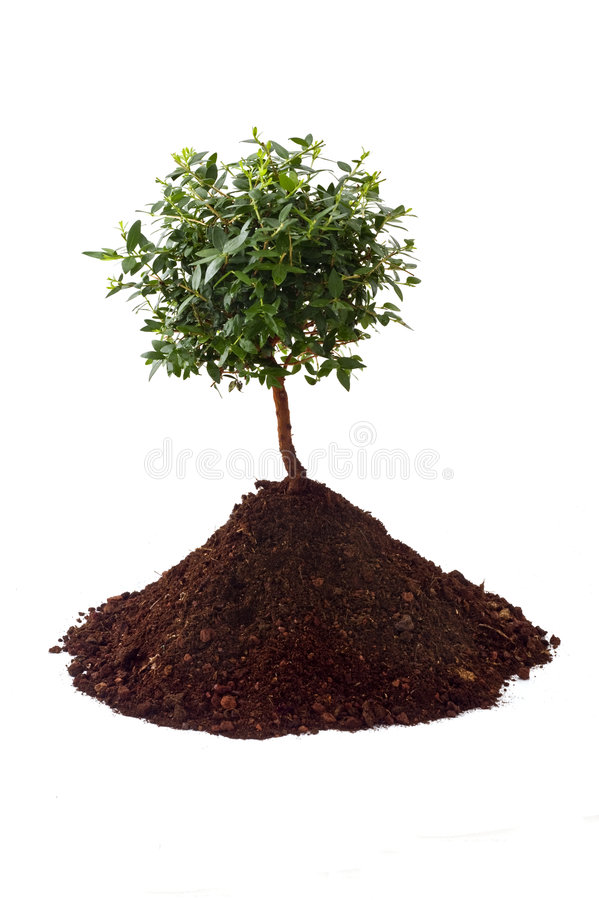 Small tree soil. Small tree on pile of soil isolated on white stock photo