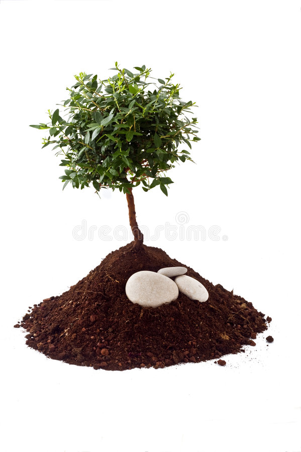 Small tree soil. Small tree on pile of soil isolated on white royalty free stock photos