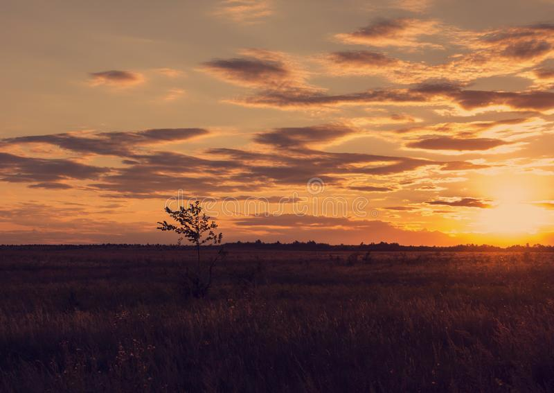 A small tree in the steppe. A small single tree in the evening steppe stock photography
