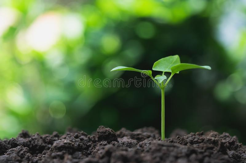 Small trees are growing on the ground incomplete in soft green n. Ature background stock photos
