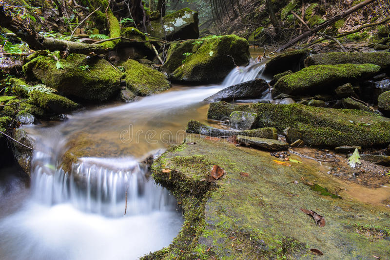 A small trout stream in the Appalachian Mountains. A small fast flowing native Brook Trout Stream flowing through a heavily forested region of the northern stock photography