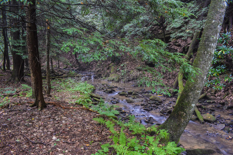 A small trout stream in the Appalachian Mountains. A small fast flowing native Brook Trout Stream flowing through a heavily forested region of the northern stock photos
