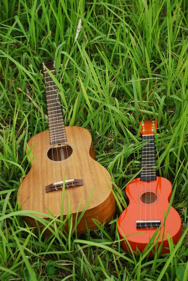 Small ukulele music acoustic instrument. Small wooden ukulele music acoustic instrument royalty free stock photography