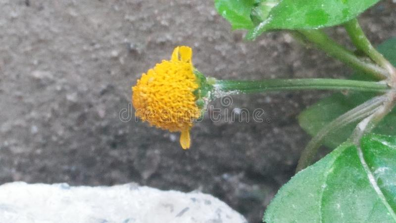 Small unnoticed flower royalty free stock photo