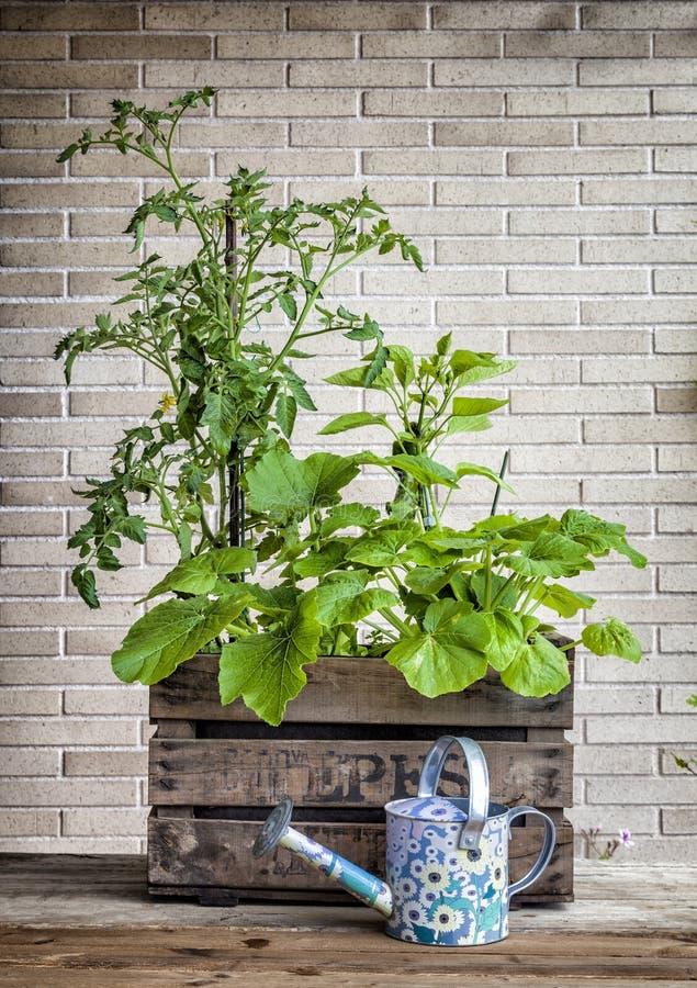 A small urban vegetable garden stock photography