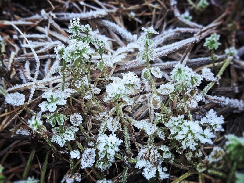 Small plants with ice stock image