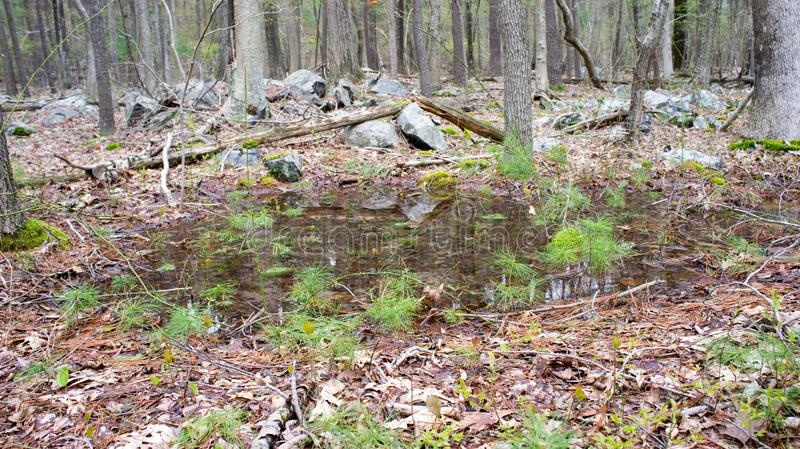 A Small Vernal Pool in the Blue Hills Reservation. Vernal pools are common in the spring, and the Blue Hills Reservation is no exception stock photos