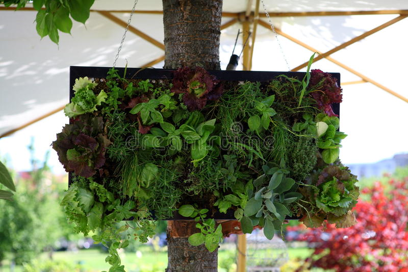 Small vertical garden royalty free stock images