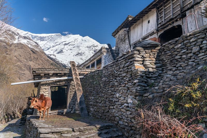 The small village on the Annapurna trail track. The photo was taken during my one year trip around Asia royalty free stock photos