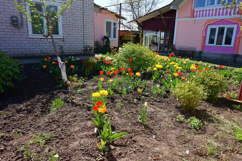A small village house and tulips in a flowerbed near it stock photos