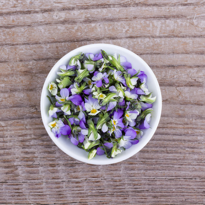 Small, violet heartsease stock images