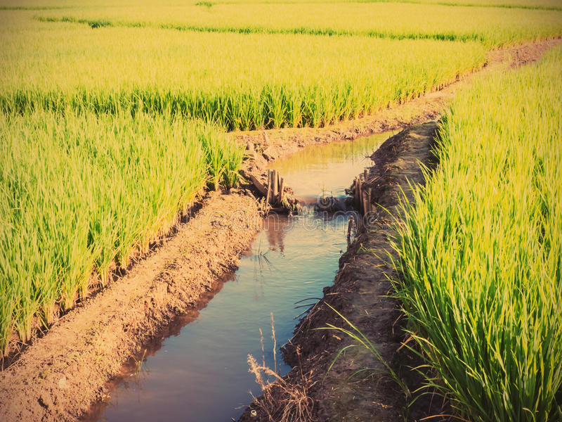 Small water dam. Near by rice fied in Thailand, vintage filter effect royalty free stock photography