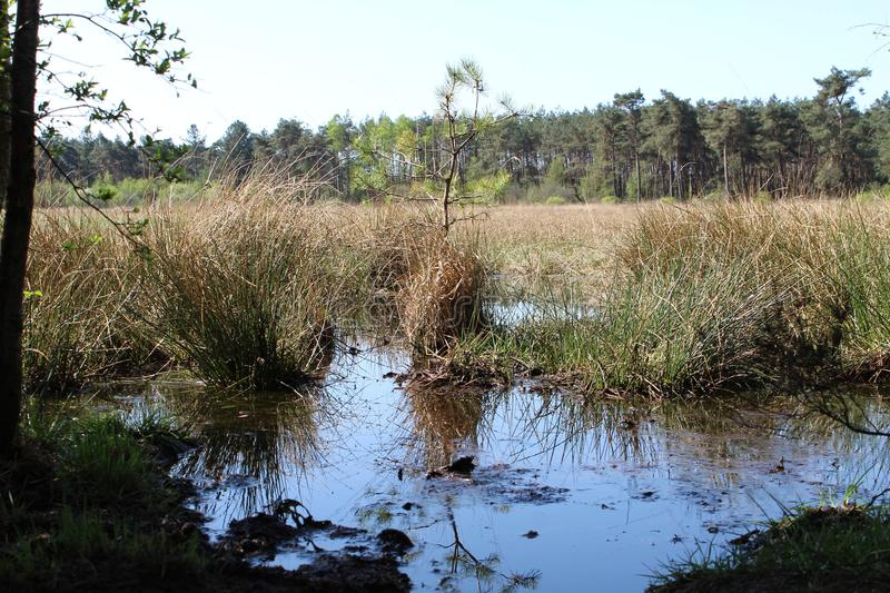 Small Pond. A small water pond in an forest clearing stock photography