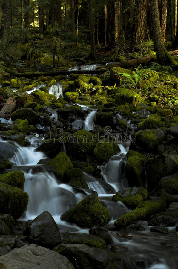 Small waterfall in the Forest, Washington state. Serene waterfalls in the Sol Duc Valley of Olympic National Park in Washington state USA royalty free stock image
