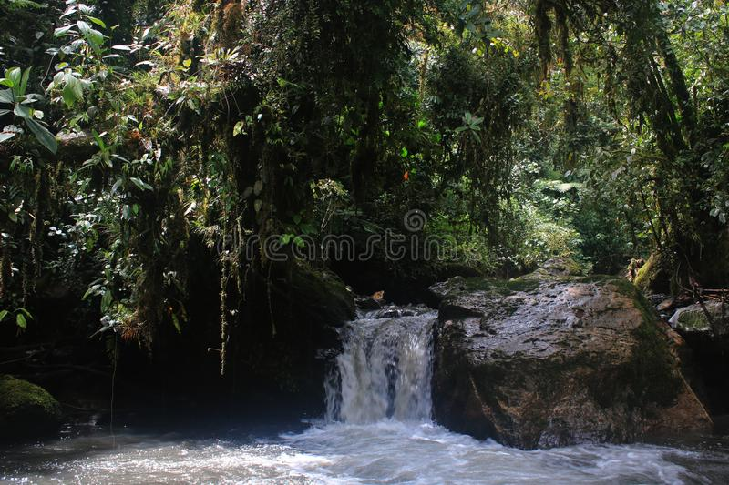 A small waterfall with a lot of overhaning plants in tropical rainforest stock photos