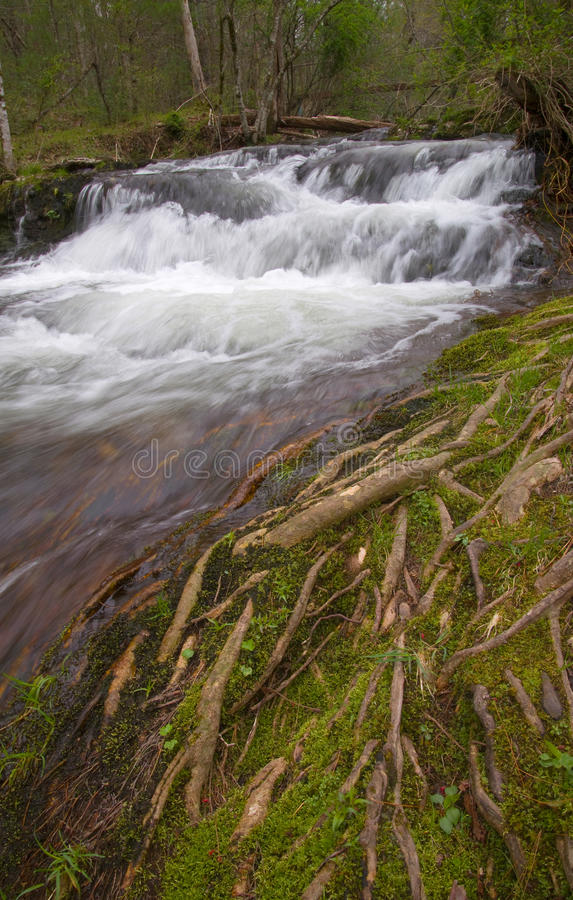 Download Small Waterfall Through Mossy Tree Roots Stock Photo - Image: 54656710
