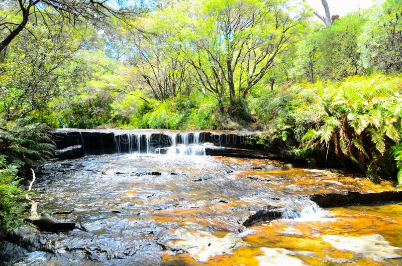 Small waterfall in the rainforest at Wentworth Falls, New South Wales, Australia. royalty free stock photos