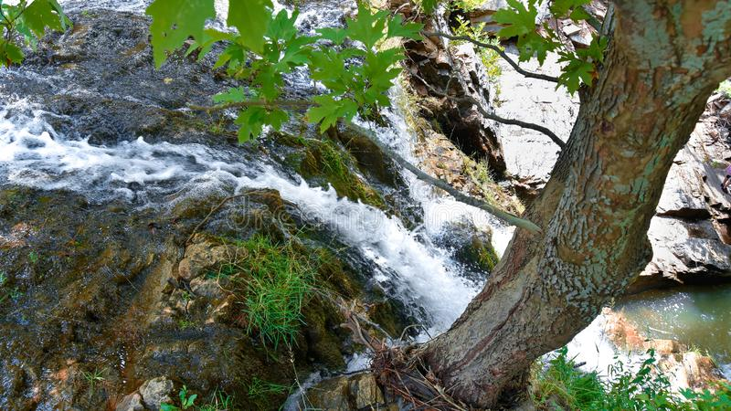 Small waterfall shot from above near a tree roots. Small waterfall having a rooted tree on its edge and a small stream of water, shot in a summer day in a royalty free stock image