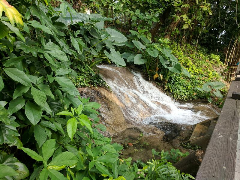 Small waterfall at Konoko Falls in Jamaica stock photo