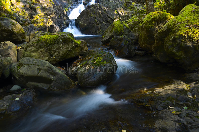Download Small Waterfalls And Rain Forest Stock Photo - Image: 16533860