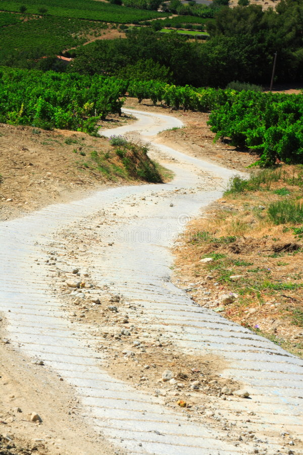 Free Small Way Through The Vines Stock Image - 2985291